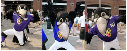 Edgar, Allan and Poe: the Baltimore Ravens Mascots